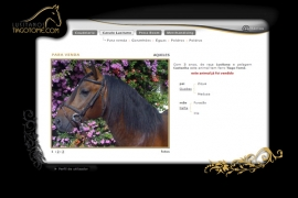 Website de Coudelaria